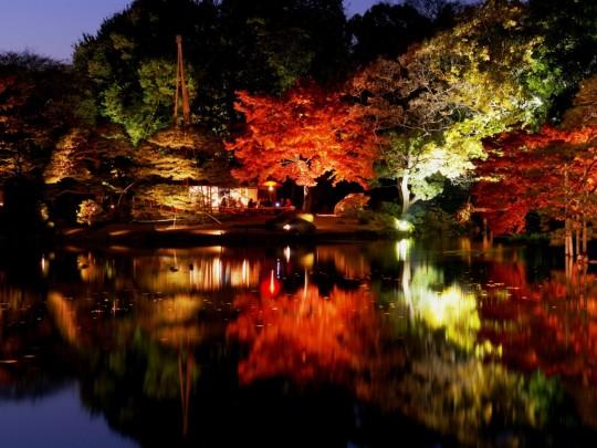 紅葉,日帰り,電車,都内,関東,ドライブ,画像