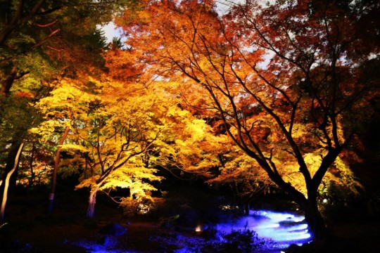 写真スポット,都内,東京,都内近郊,撮影名所,神奈川,画像