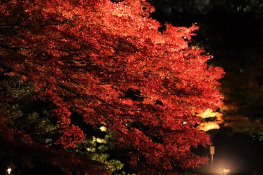 関東,デートプラン,秋,2016,おすすめ,ドライブ,画像
