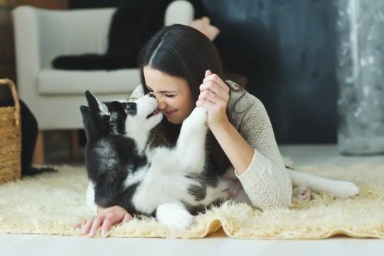 イヌの画像