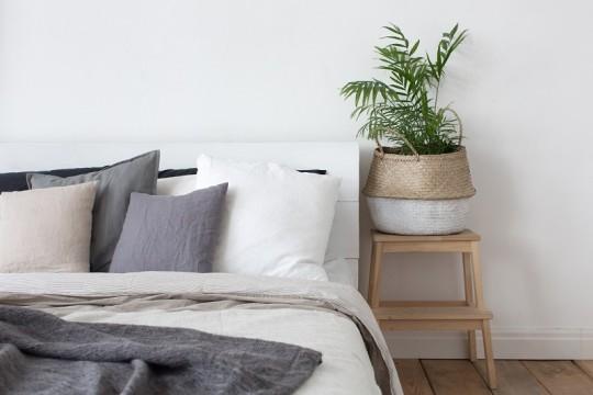 一人暮らし部屋にグリーンを。初心者でも意外と育てやすい観葉植物
