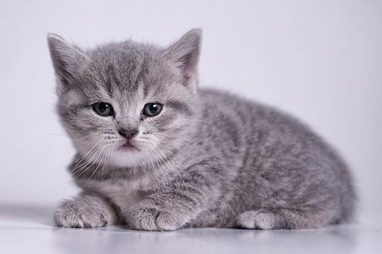 こちらを見つめる愛らしい子猫