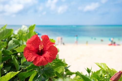 沖縄でママ活するなら知りたいこと!ママ活スポット付き
